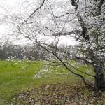 Ein Baum im Frühling, ein Zeichen für Erneuerung