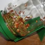 Keimglas mit gekeimten Sprossen