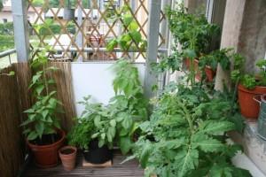 Töpfe mit Gemüsepflanzen