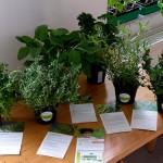 Bio-Kräuter auf Tisch