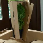Kräuterfeld eine Pflanze
