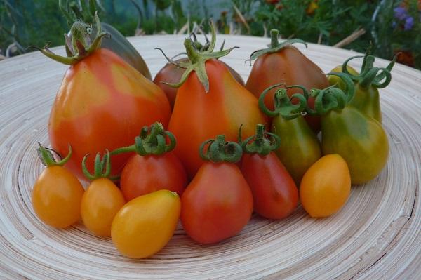 birnenförmige Tomaten