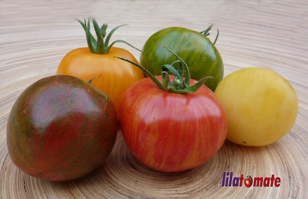 gestreifte Tomaten