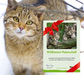 Wildkatzen-Patenschaft vom BUND