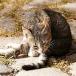 Katze auf Hof Mahlitzsch