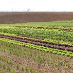 Demeter-Salat und -Gemüse im Freiland