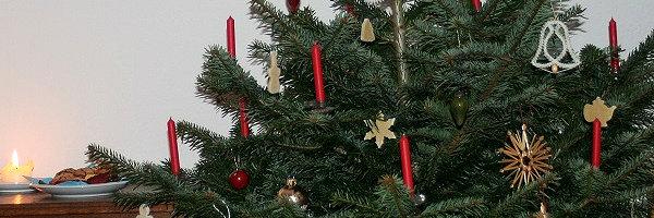 Nachhaltiger Weihnachtsbaum Detail