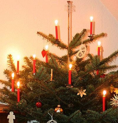 ist der weihnachtsbaum kologisch korrekt livona der
