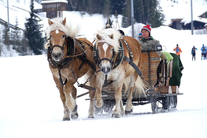 Pferdeschlittenfahrt in Ramsau am Dachstein
