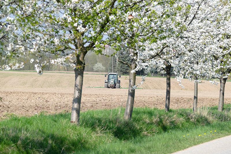 Reihe Kirschbäume am Feldrand, dahinter ein frisch bearbeitetes Feld mit Traktor