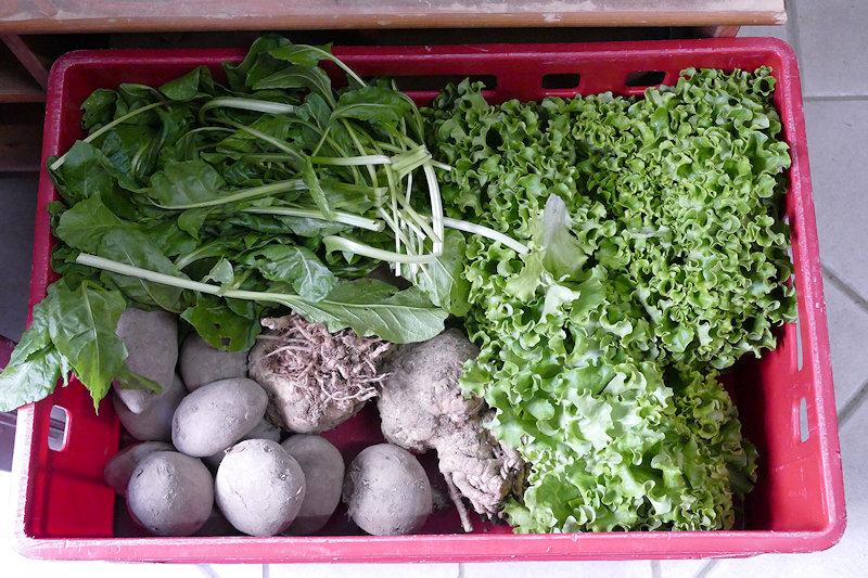 Kiste mit Salat, Spinat, Kartoffeln, Rote Bete und Sellerie
